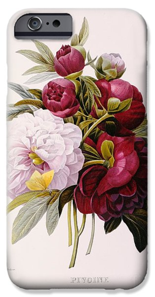 Flora iPhone Cases - Peonies engraved by Prevost iPhone Case by Pierre Joseph Redoute