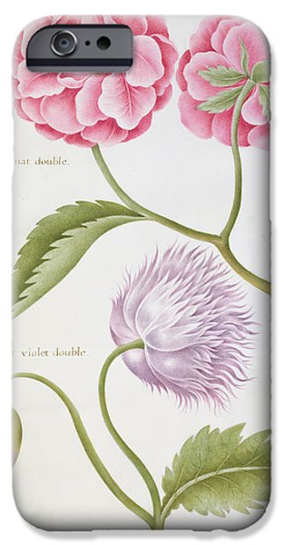 Still Life iPhone Cases - Peony and Double Poppy iPhone Case by Nicolas Robert