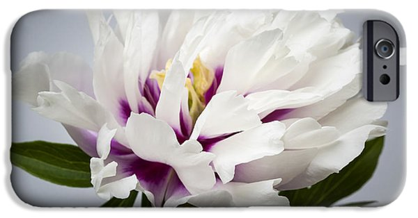 Close Up Floral iPhone Cases - Peony flower iPhone Case by Elena Elisseeva