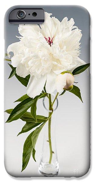 Peony iPhone Cases - Peony flower in vase iPhone Case by Elena Elisseeva