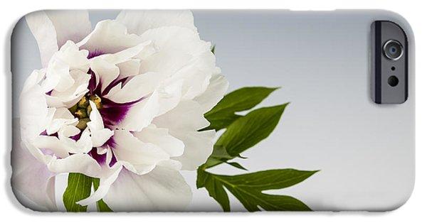 Peonies iPhone Cases - Peony flower on gray iPhone Case by Elena Elisseeva