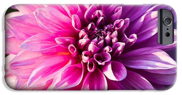Indiana Flowers iPhone Cases - Peony In Bloom iPhone Case by Alexander Senin