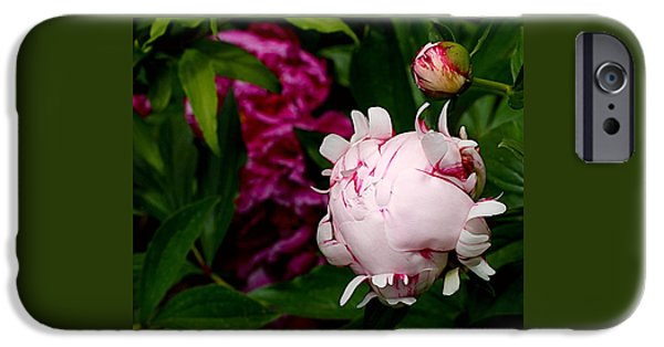Peonies iPhone Cases - Peony Life iPhone Case by Rona Black