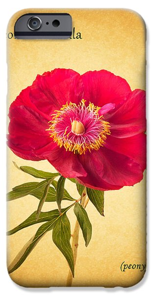 Flora Photographs iPhone Cases - Peony iPhone Case by Mark Rogan