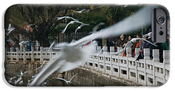 Flying Seagull iPhone Cases - People Feeding The Gulls In A Park iPhone Case by Panoramic Images