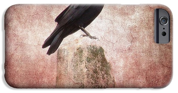Photographs With Red. iPhone Cases - Perched Crow iPhone Case by Gothicolors Donna Snyder