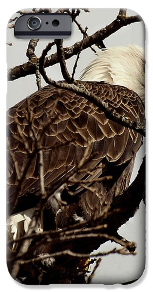 Perched On High iPhone Case by Thomas Young