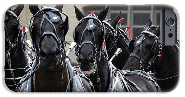 States iPhone Cases - Percheron Horse Team 2008 iPhone Case by Joseph Duba