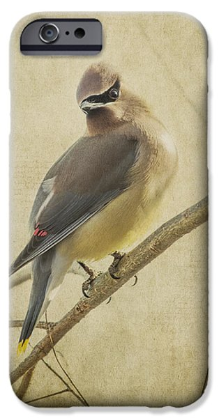 Jeff Swanson iPhone Cases - Perching Waxwing iPhone Case by Jeff Swanson