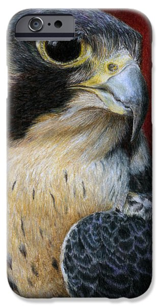 Colored Pencils iPhone Cases - Peregrine Falcon iPhone Case by Pat Erickson