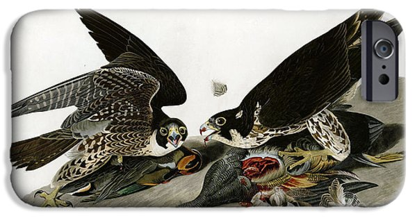 Wild Life Drawings iPhone Cases - Peregrine Falcons  iPhone Case by Celestial Images