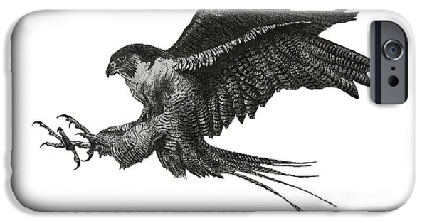 Pen And Ink Illustration iPhone Cases - Peregrine Hawk or Falcon Black and White with Pen and Ink Drawing iPhone Case by Mario  Perez
