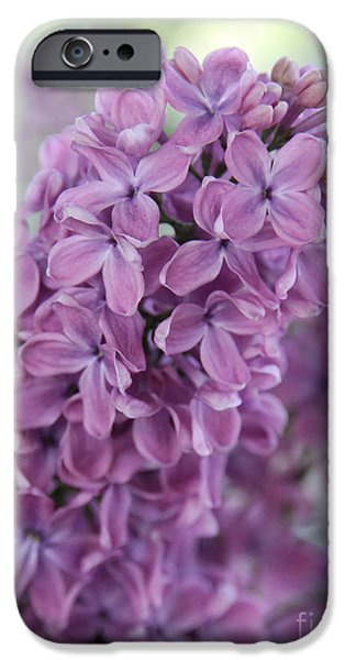 Close Up iPhone Cases - Perfect Lilac iPhone Case by Jasna Buncic