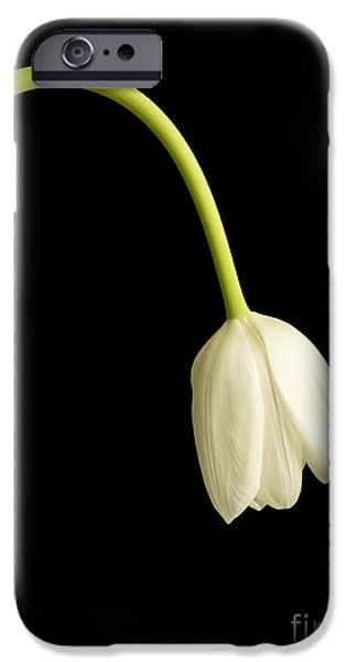 Florals iPhone Cases - Perfect Love iPhone Case by Edward Fielding