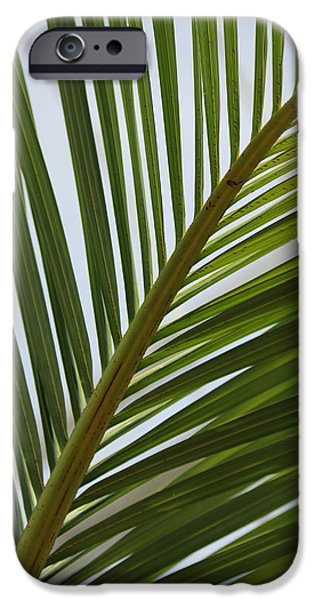 Bamboo Fence iPhone Cases - Peridot 3 iPhone Case by Angelique Francis
