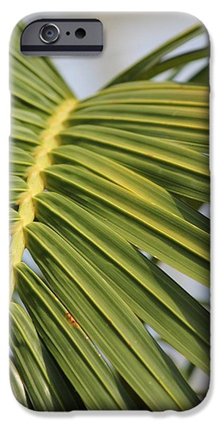 Bamboo Fence iPhone Cases - Peridot 4 iPhone Case by Angelique Francis