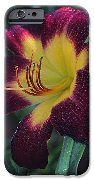 Rainy Day iPhone Cases - Persian Ruby Day Lily IV iPhone Case by Suzanne Gaff