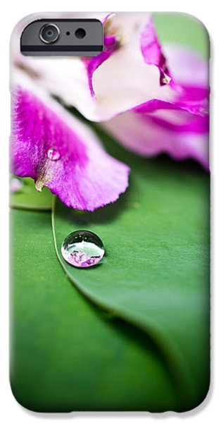 Peruvian Lily Raindrop iPhone Case by Priya Ghose