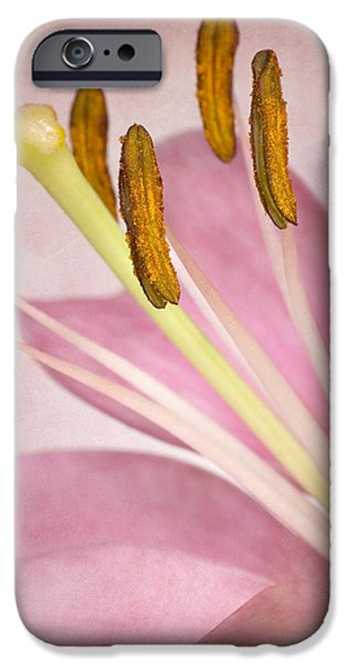 Asiatic Lily iPhone Cases - Petals and Company iPhone Case by David and Carol Kelly
