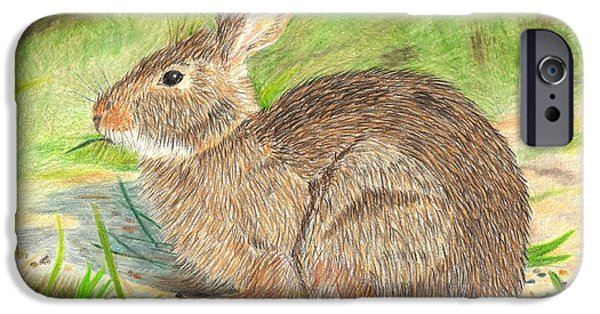 Rust Drawings iPhone Cases - Peter Cottontail iPhone Case by Sheila Byers