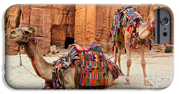 Camel Photographs iPhone Cases - Petra Camels iPhone Case by Stephen Stookey
