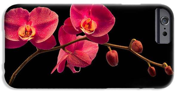 Florida Flowers Photographs iPhone Cases - Phalaenopsis iPhone Case by Debra and Dave Vanderlaan