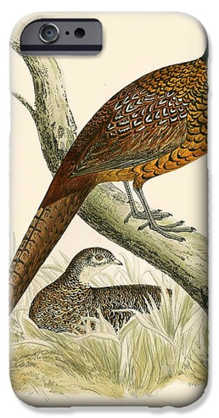 Hunting Bird iPhone Cases - Pheasant iPhone Case by Beverley R. Morris