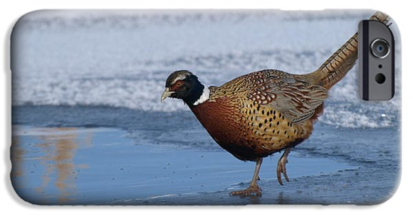 Wintertime iPhone Cases - Pheasant Fishing iPhone Case by James Peterson