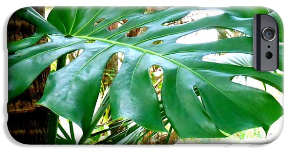 Philodendron iPhone Cases - Philodendron iPhone Case by Kay Gilley