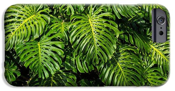 Philodendron iPhone Cases - Philodendron iPhone Case by Laszlo Podor