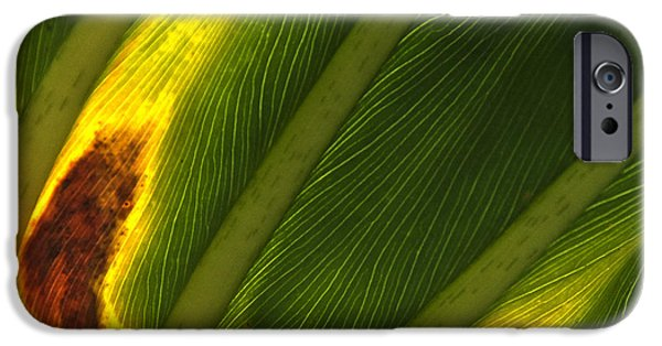 Philodendron iPhone Cases - Philodendron leaf  iPhone Case by Roy Thoman