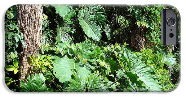 Philodendron iPhone Cases - Philodendrons at FIT Botanical Garden iPhone Case by Kay Gilley