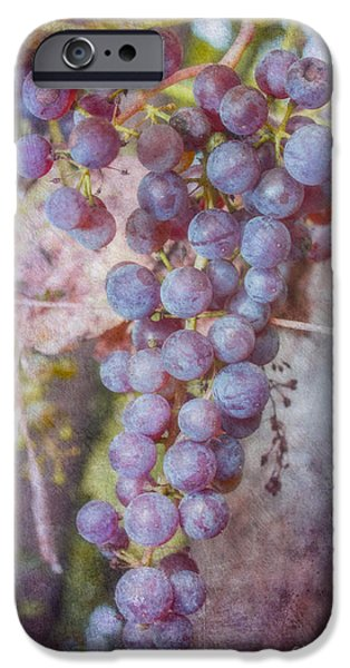 Jeff Swanson iPhone Cases - Phils Grapes iPhone Case by Jeff Swanson