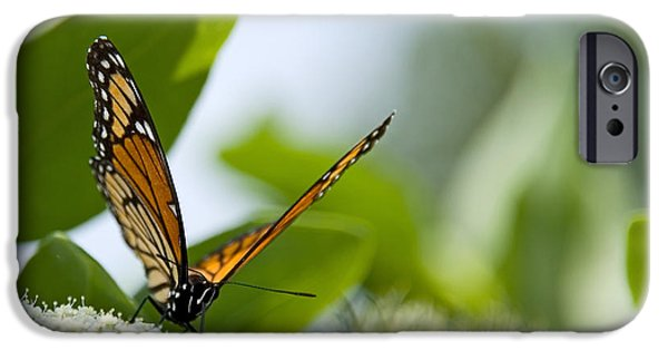 Outdoors iPhone Cases - Photo of Monarch Butterfly on a Flower iPhone Case by Paul Velgos