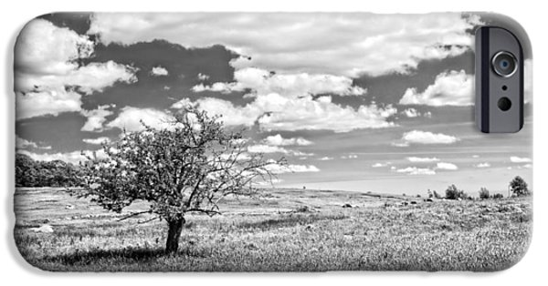Rural Scenes Digital Art iPhone Cases - Photo of Single Apple Tree In Maine Blueberry Field iPhone Case by Keith Webber Jr