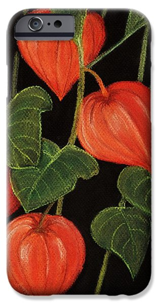 Florals Pastels iPhone Cases - Physalis iPhone Case by Anastasiya Malakhova
