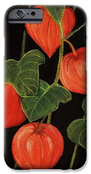 Plant Pastels iPhone Cases - Physalis iPhone Case by Anastasiya Malakhova