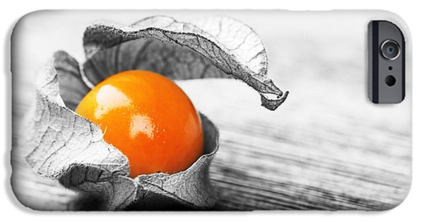 Berry iPhone Cases - Physalis iPhone Case by Jane Rix