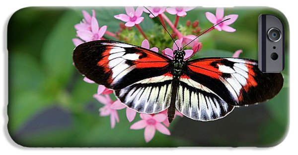 Florida Flowers Photographs iPhone Cases - Piano Key Butterfly on Pink Penta iPhone Case by Sabrina L Ryan