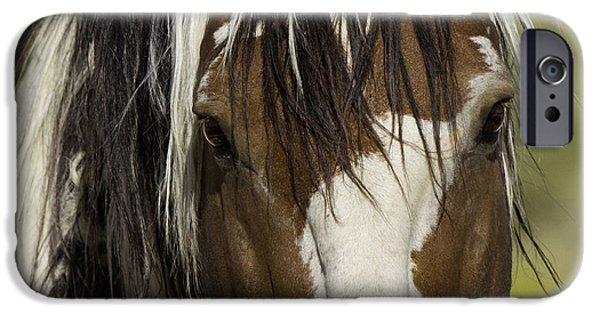 Horse Photographs iPhone Cases - Picassos Eyes iPhone Case by Carol Walker