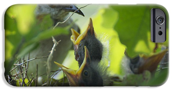 Baby Bird iPhone Cases - Pick Me   iPhone Case by Dana Babcock