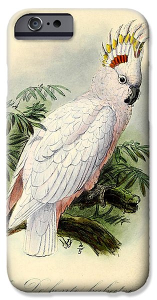 Cockatoo iPhone Cases - Pied Cockatoo iPhone Case by J G Keulemans