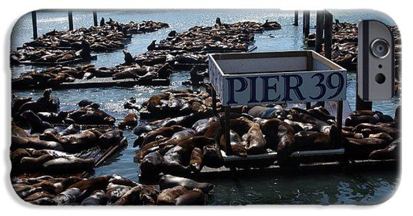Sea Platform iPhone Cases - Pier 39 San Francisco Bay iPhone Case by Aidan Moran