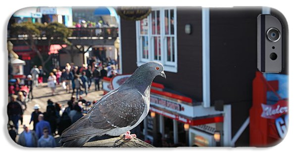 Sight Seeing San Francisco iPhone Cases - Pigeon Enjoying Pier 39 In San Francisco California 5D26131 iPhone Case by Wingsdomain Art and Photography