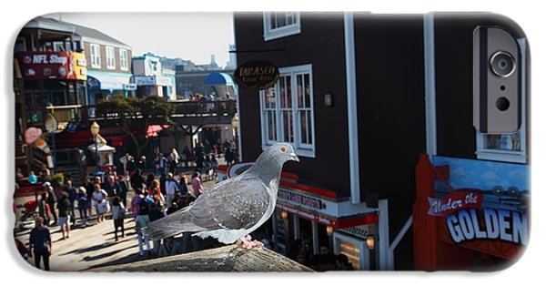 Sight Seeing San Francisco iPhone Cases - Pigeon Enjoying Pier 39 In San Francisco California 5D26132 iPhone Case by Wingsdomain Art and Photography