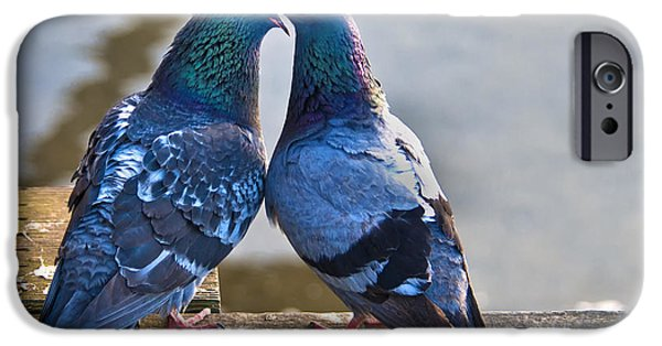 Gray Hair iPhone Cases - Pigeon Kissing iPhone Case by Peter Dang