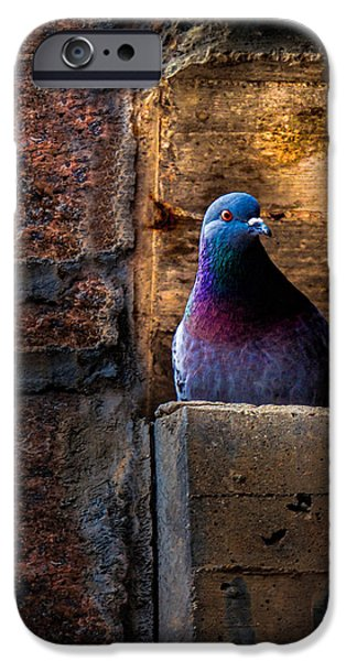 Pigeon iPhone Cases - Pigeon of the City iPhone Case by Bob Orsillo