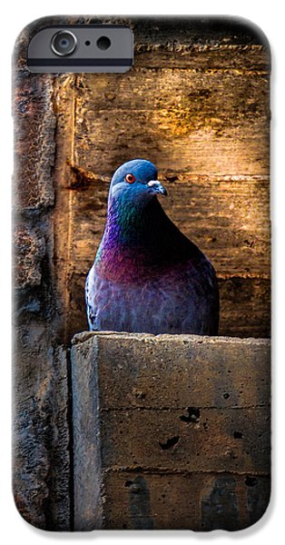 Pigeon of the City iPhone Case by Bob Orsillo