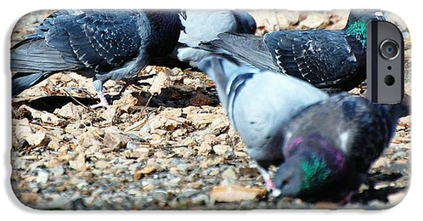 Animals Photographs iPhone Cases - Pigeon Party iPhone Case by Don Mann