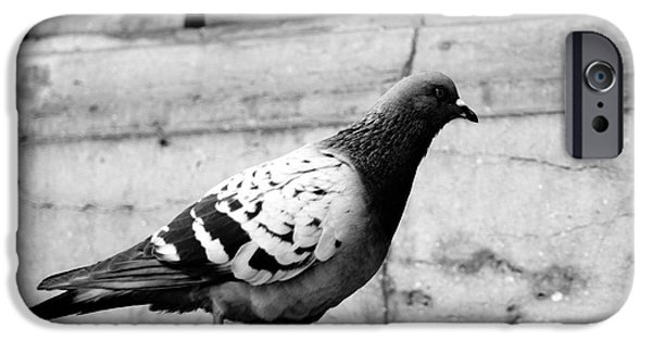 Ballet Of Colors iPhone Cases - Pigeons In front Of The Palais Garnier In Paris France iPhone Case by Richard Rosenshein